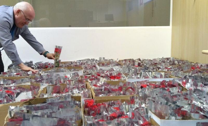 Ao todo serão distribuídos oito mil botões de rosas.
