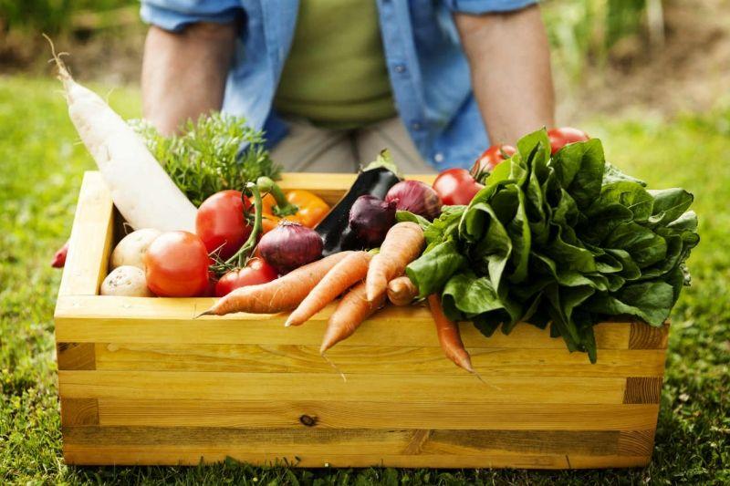 Atividade enfatizará os aspectos das hortas e alimentos orgânicos