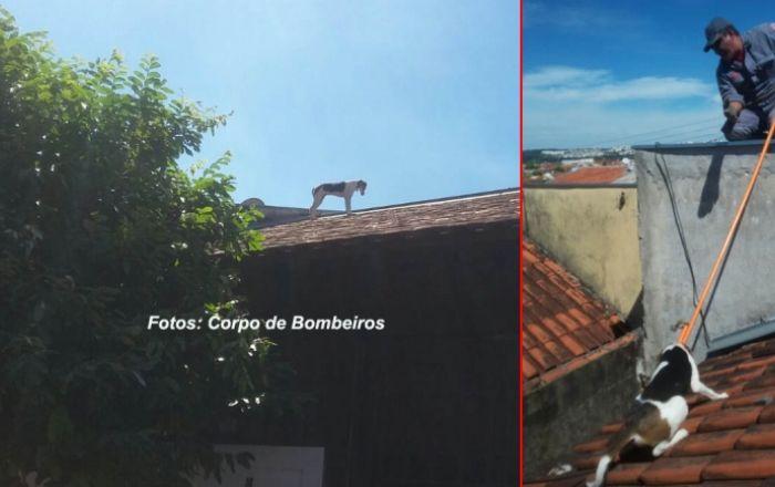 MUNDO ANIMAL: Bombeiros salvam cães em telhado e num buraco.