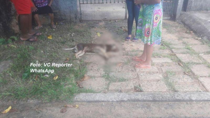 Os moradores estão revoltados com os envenenamento de animais.