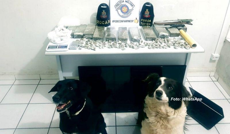 As cadelas pretinha e patrícia indicaram onde estava o traficante.