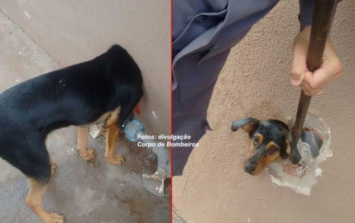 Bombeiros resgatam cachorra com cabeça presa em cano no muro