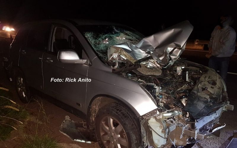 Com o impacto, a frente do carro ficou destruída. Animal morreu no local.