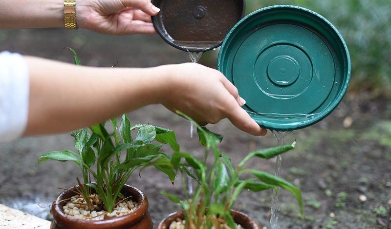 Moradores devem ficar atentos aos vasos de plantas