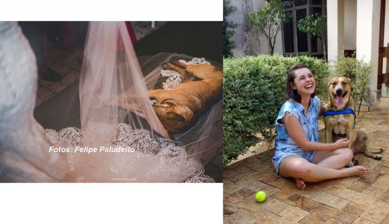 Cão deixou no véu da noiva; depois foi adotado.