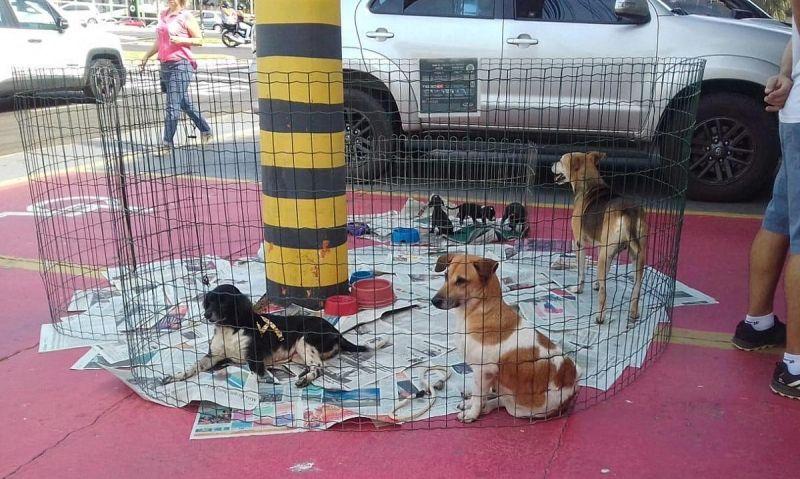 A feira de adoção de animais acontece nesta quinta, aproveitando o feriado nacional.