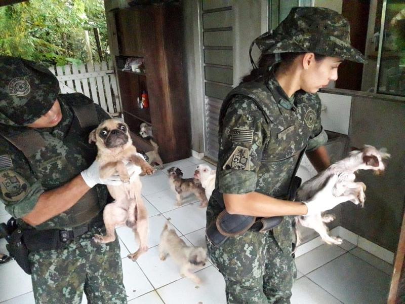 Mulher é multada em R$ 54 mil após maltratar 18 cachorros