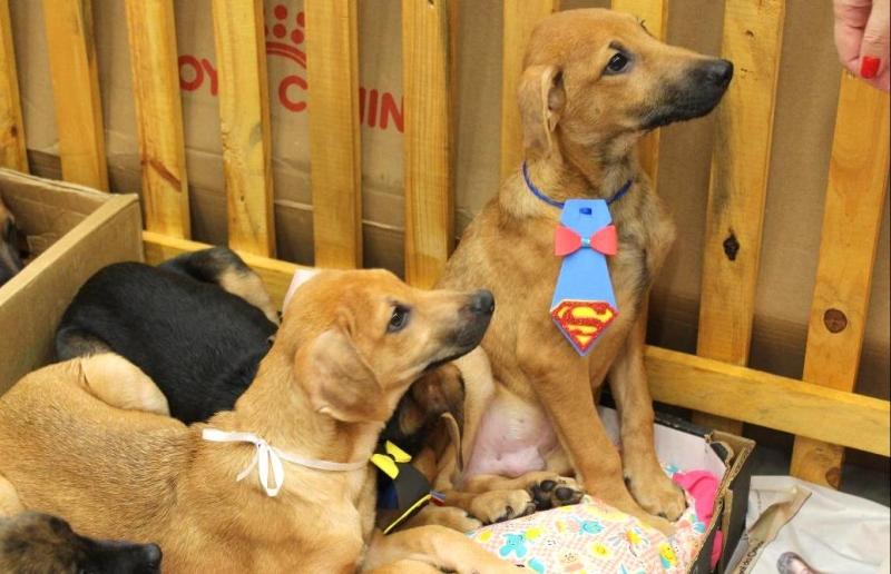 Bauru Shopping realiza feira de animais neste sábado