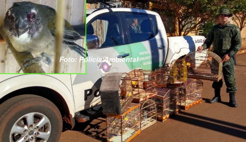 Criador é multado pela Polícia Ambiental por maus tratos contra ave