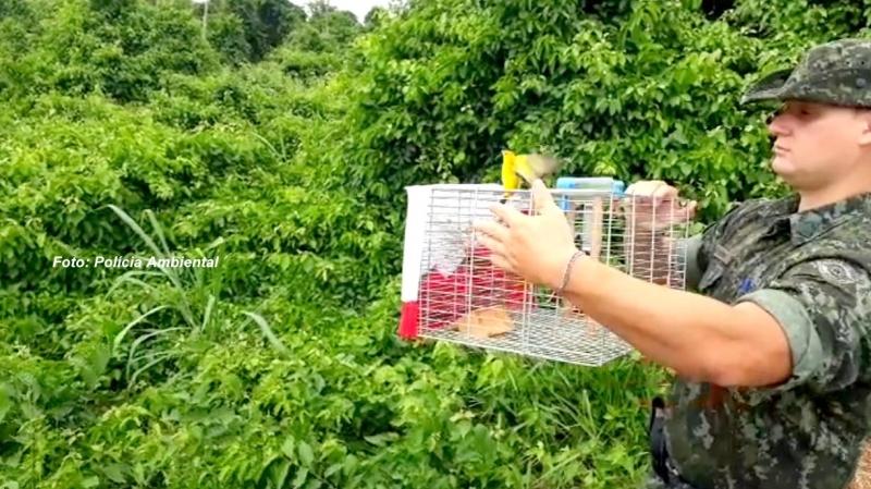 Polícia Ambiental solta aves mantidas em cativeiro e multa criadores