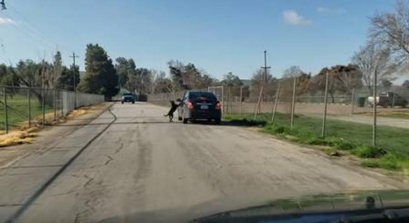 """Cão """"não aceita ser abandonado"""" e segue o dono correndo atrás do carro"""