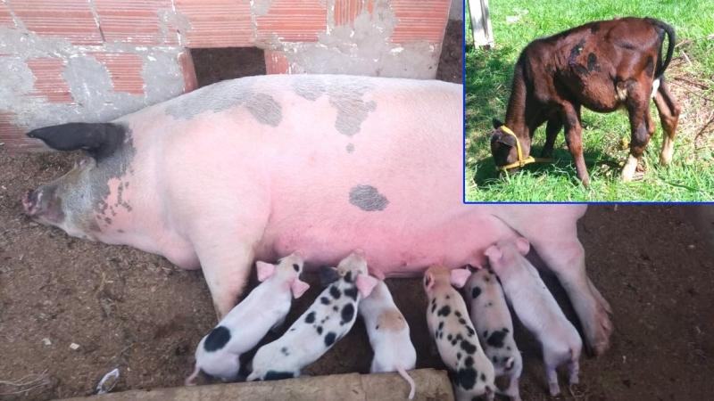 Criminosos furtam animais na Fumares. Secretaria pede ajuda à população