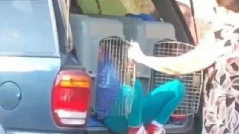Mulher é presa por transportar netos em caixas para cães