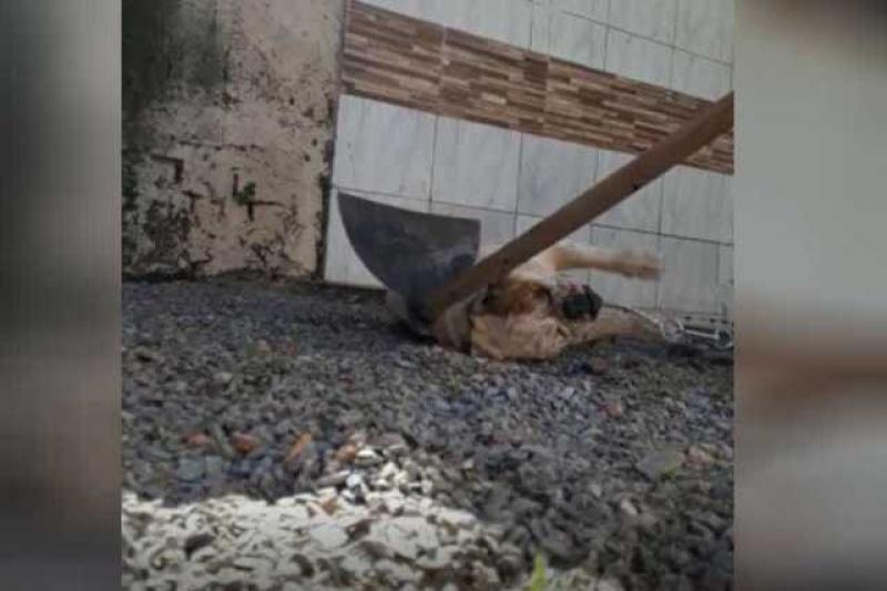 Homem que filmou a si próprio matando um cão com enxada está foragido