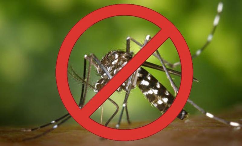 Casos de dengue aumentam em toda região e situação preocupa
