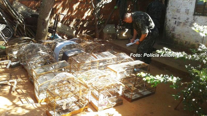Polícia Ambiental faz operação e aplica multas de R$ 100 mil