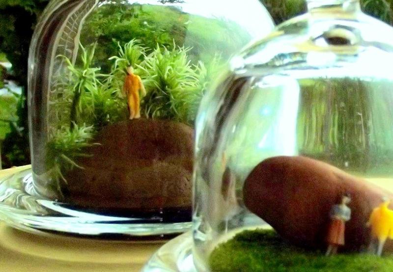 Um planeta em miniatura: terrários são bonitos, originais e fáceis de manter