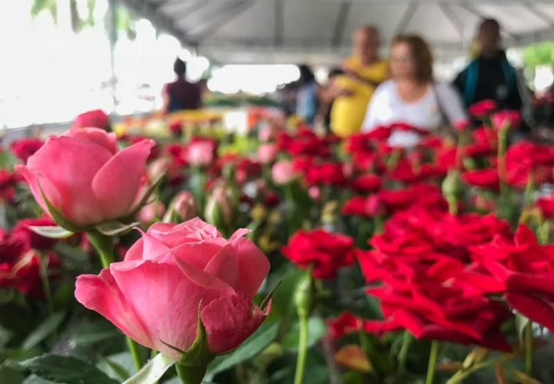 Visite a Feira de Flores de Holambra no Marília Shopping