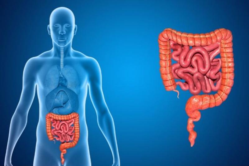 Hábitos saudáveis previnem o câncer colorretal