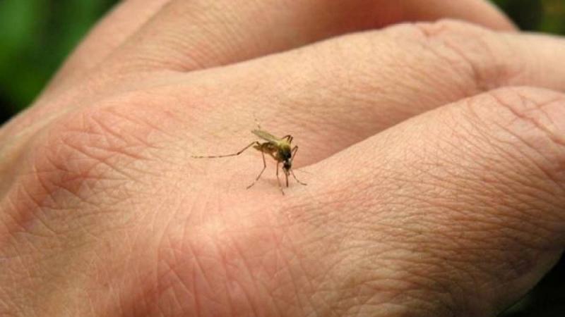 Mais uma cidade próxima a Marília enfrenta epidemia de dengue