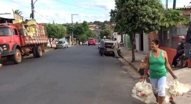 Sem ração, produtores de ovos doam galinhas na rua