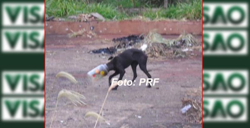PRF resgata animal que estava com a cabeça entalada em um pote plástico
