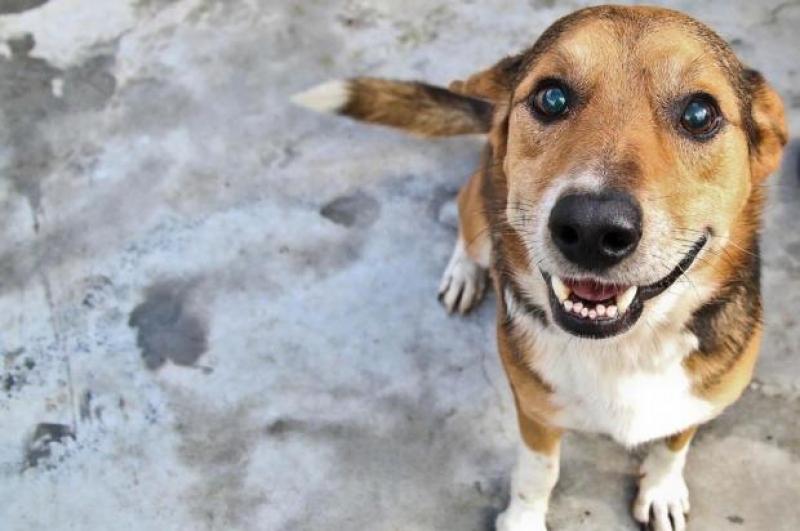 """Evento """"Feriado Animal"""" será realizado em Marília"""