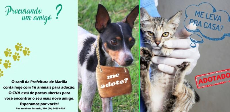 Centro de Vigilância Ambiental faz campanha para adoção de animais em Marília