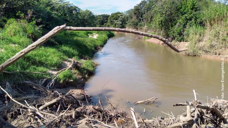 Agrotóxicos: Comitê lança luz sobre os riscos à saúde e ao meio ambiente