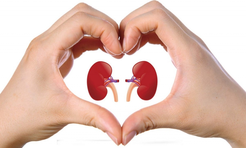 Confira 5 dicas que ajudam a prevenir doenças nos rins