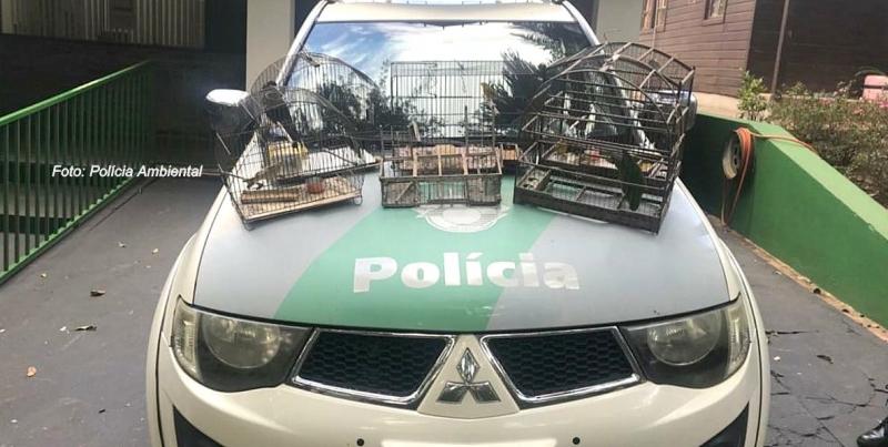 Marilienses são multados em R$ 10 mil por manter aves silvestres em cativeiro