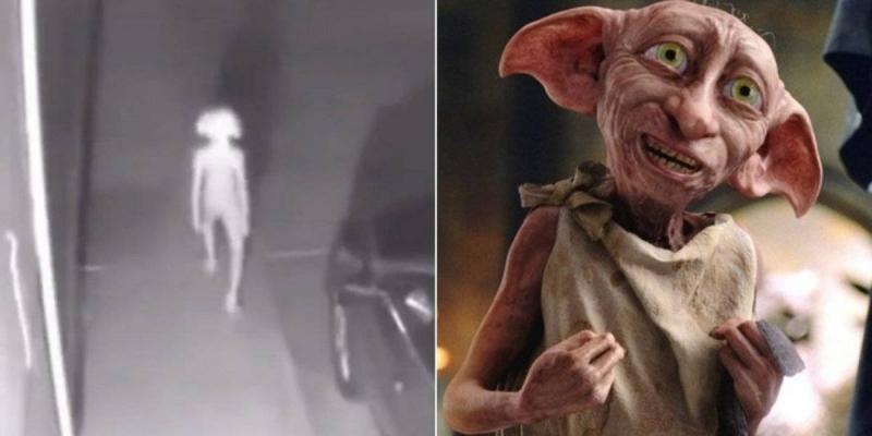 Câmeras de segurança gravam criatura que se parece com personagem do Harry Potter